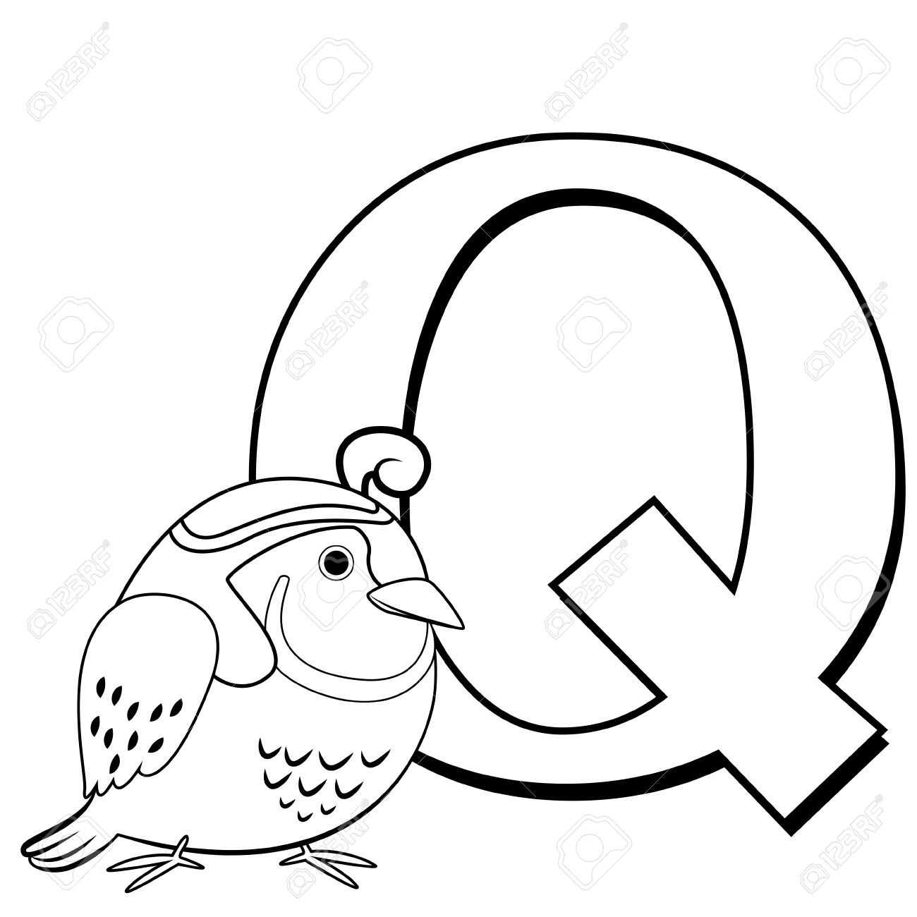 Coloring pages quail - Coloring Alphabet For Kids Q With Quail Stock Vector 16174570