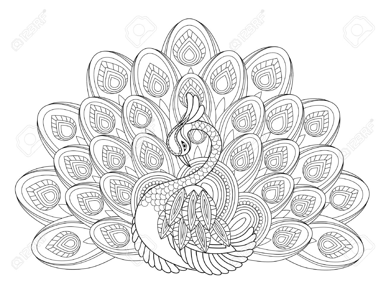 elegant peacock coloring page in exquisite style stock vector 45962509 - Peacock Coloring Page