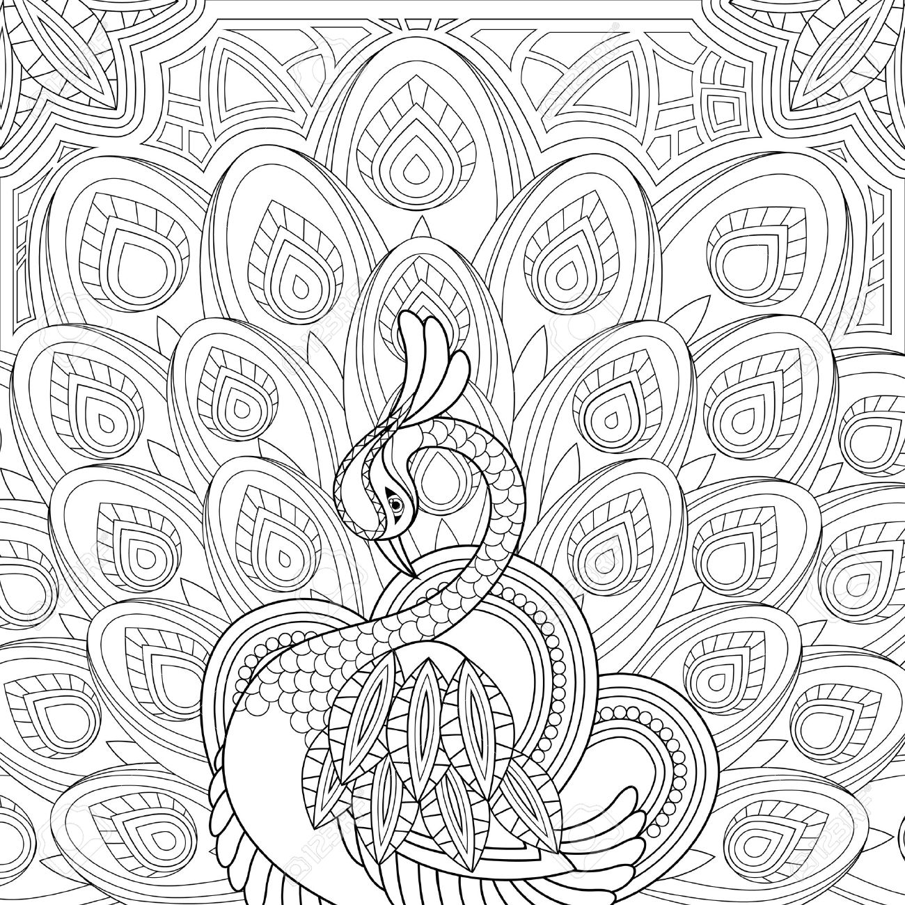 vector elegant peacock coloring page in exquisite style