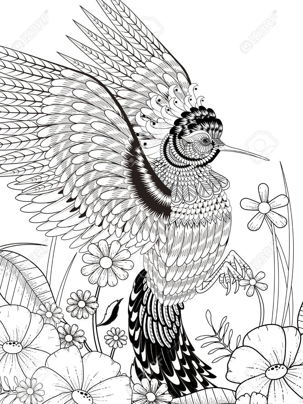 Lovely Hummingbird Coloring Page In Exquisite Line Royalty Free