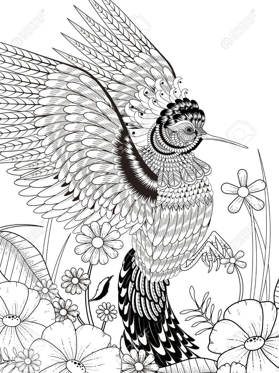 Schöne Kolibri Malvorlagen In Exquisite Linie Lizenzfrei Nutzbare ...