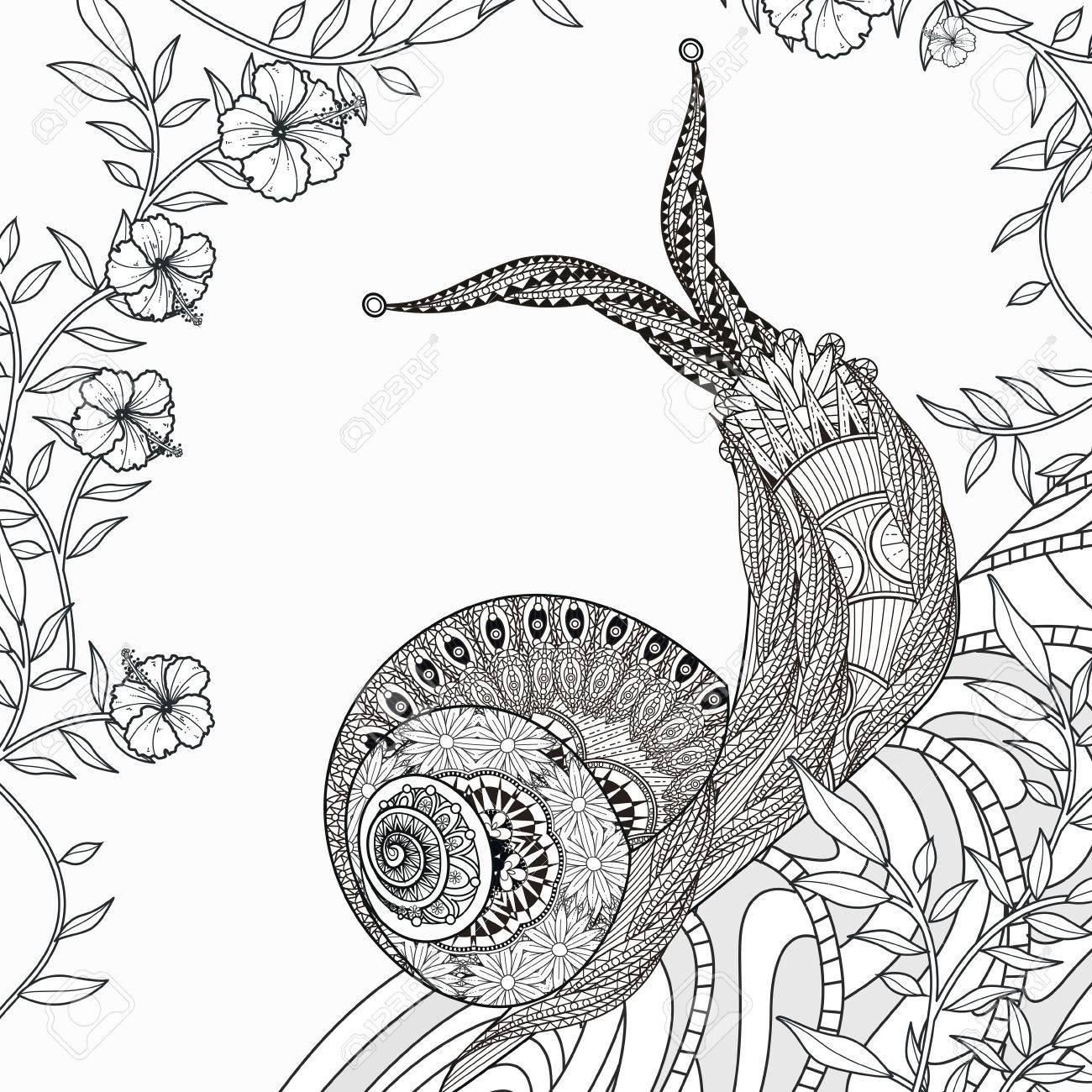 Elegant Snail Coloring Page In Exquisite Line Royalty Free Cliparts ...