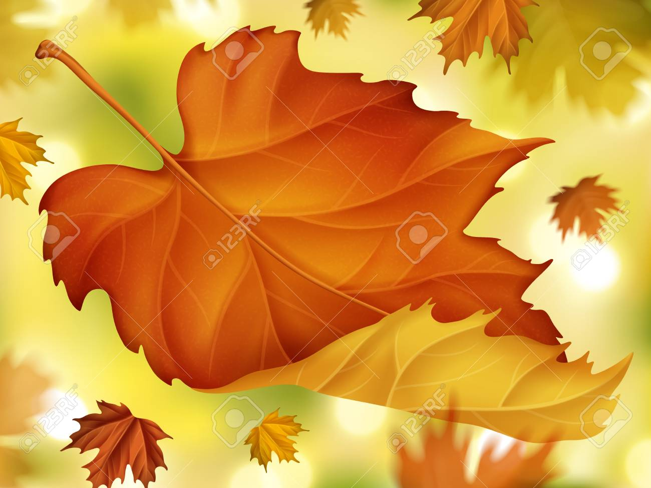 Elegant Fall Foliage Background Close Up Autumn Maples With Royalty Free Cliparts Vectors And Stock Illustration Image 82270217