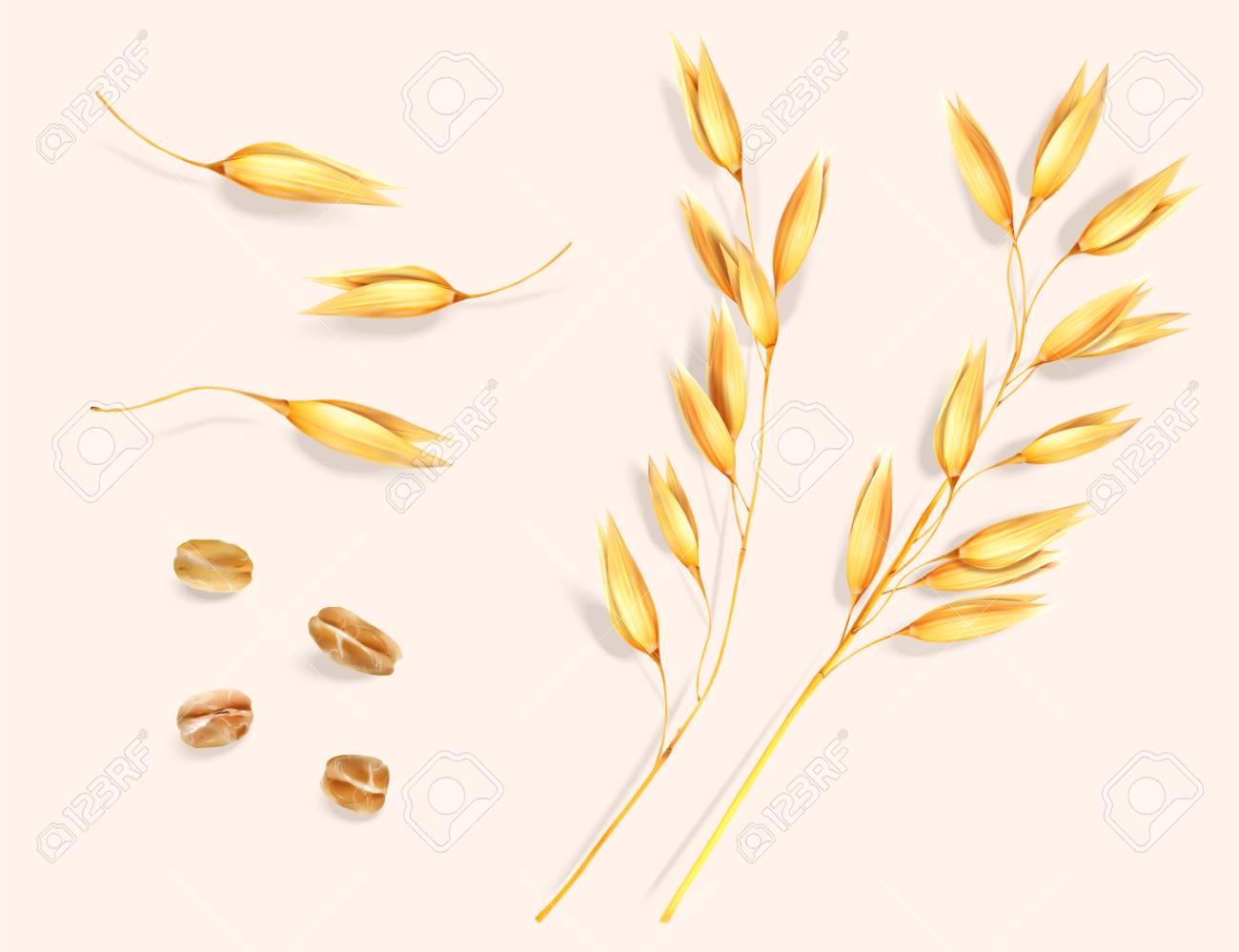 Wheat ear and grain elements - 119210223