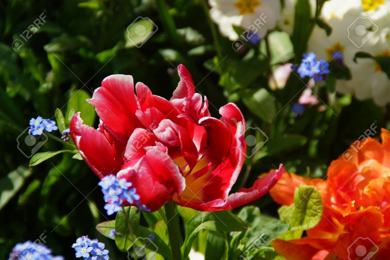 FLOWERS IN THE SENSATIONAL COLORS - SHE (IT) REPRESENT THE NATURE ...