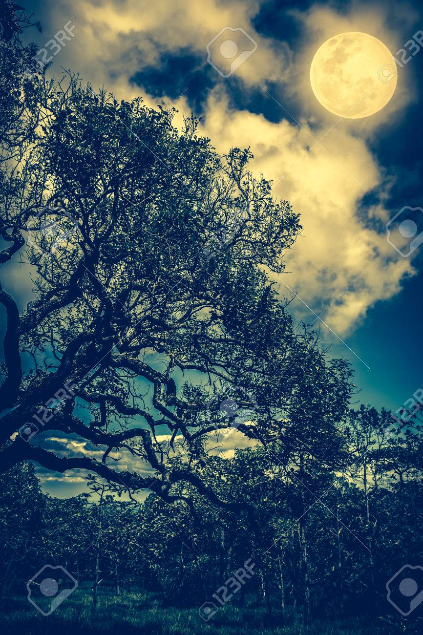 Silhouette Of The Branches Of Trees Against Sky With Bright Full Stock Photo Picture And Royalty Free Image Image 62305626