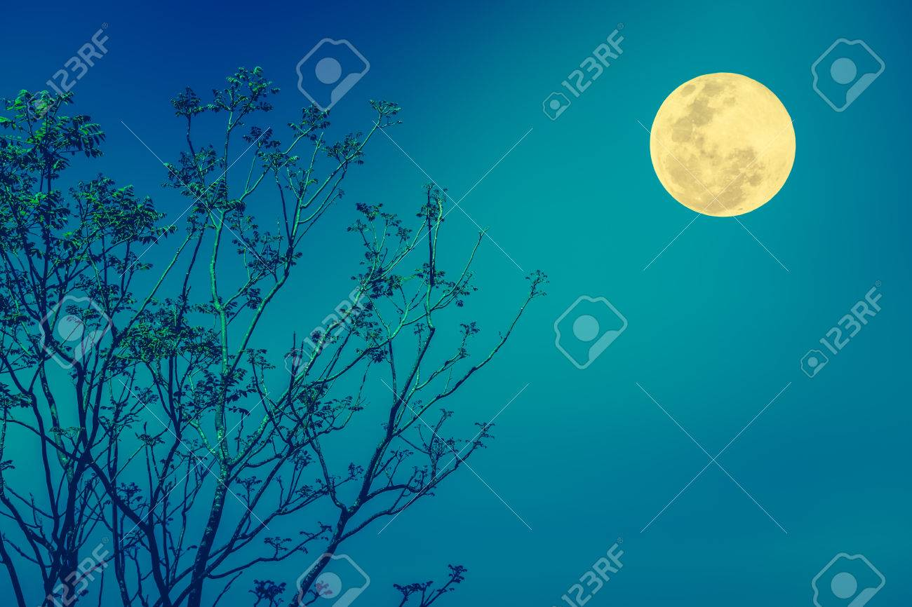 Blue Sky Full Moon But Not Blue Moon >> Silhouette The Branches Of Trees Against Blue Sky And Bright Stock