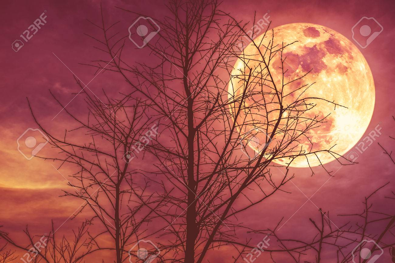 Night landscape of sky and super moon with moonlight behind silhouette of dead tree, serenity nature background. Outdoor at nighttime. The moon taken with my own camera. - 82172591