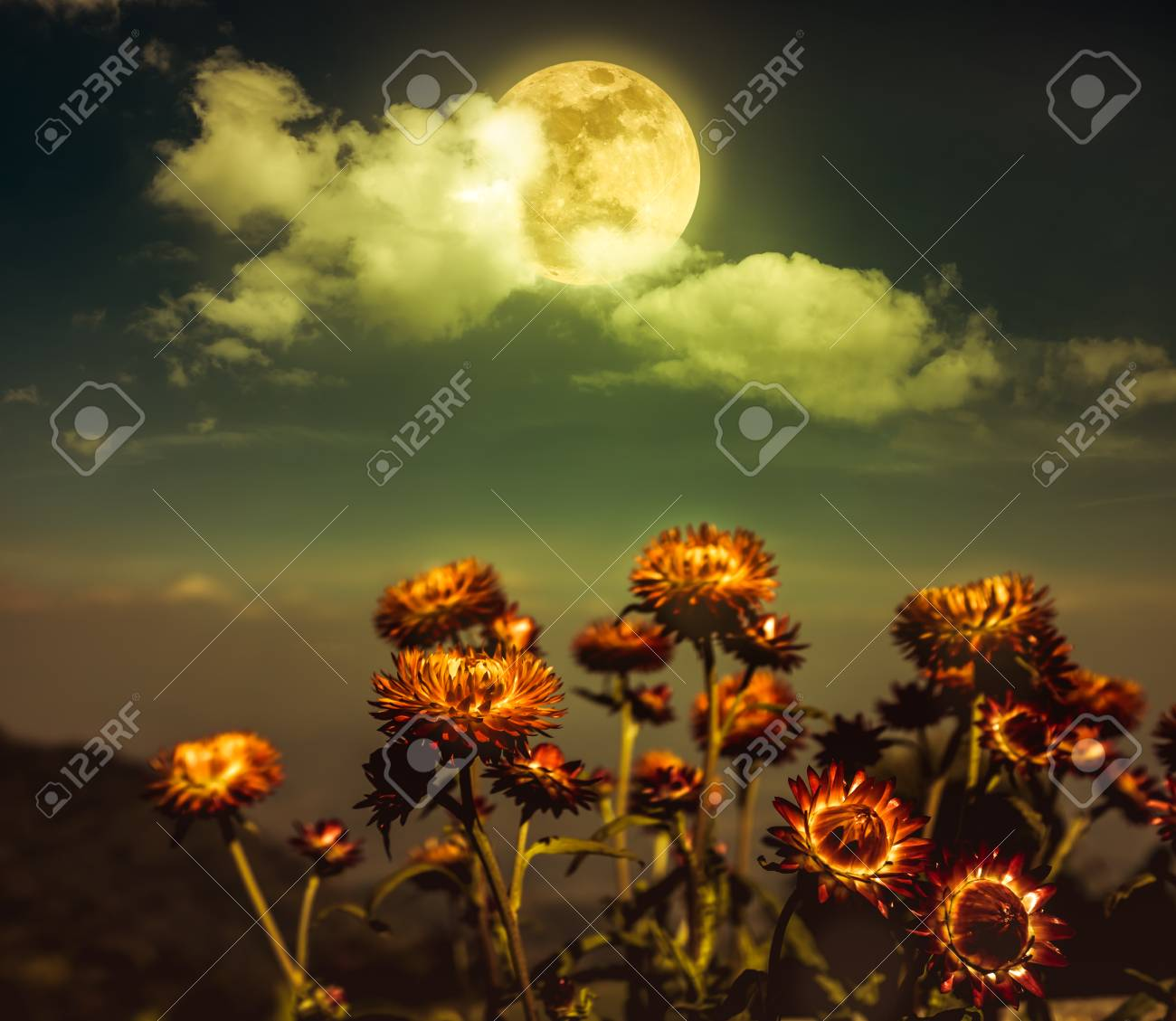 Beautiful night landscape of sky with full moon behind clouds beautiful night landscape of sky with full moon behind clouds above dry straw flowers serenity izmirmasajfo