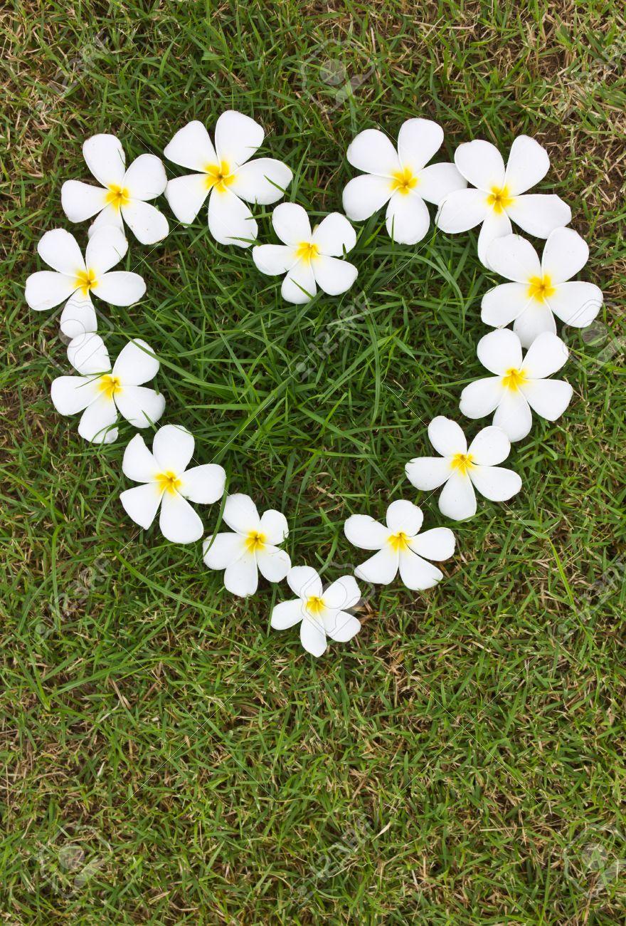 Lan Thom Blancas En Forma De Corazón Las Flores Sobre La Hierba