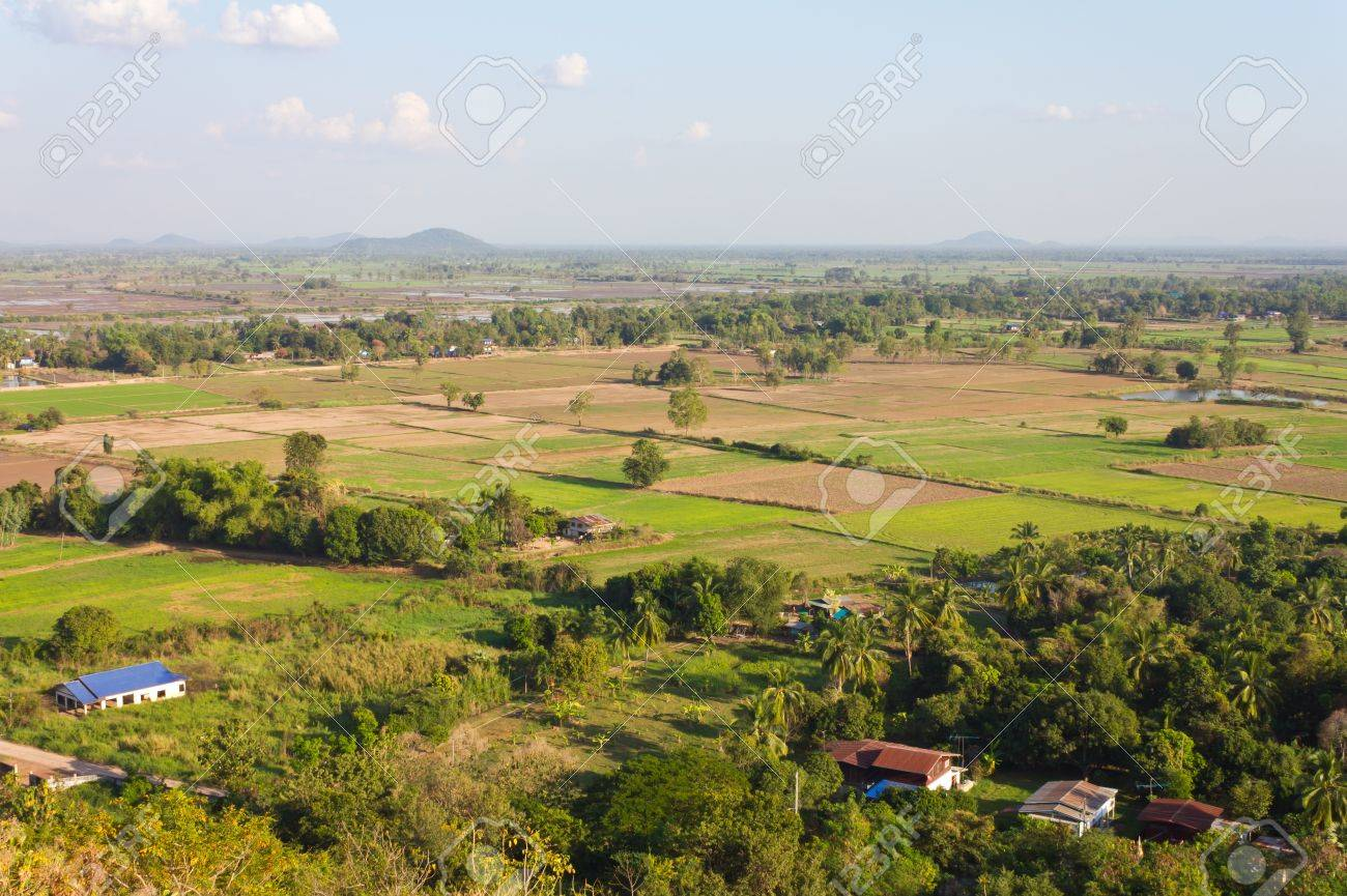View of the rural areas where rice farming in Thailand. Stock Photo - 11546552