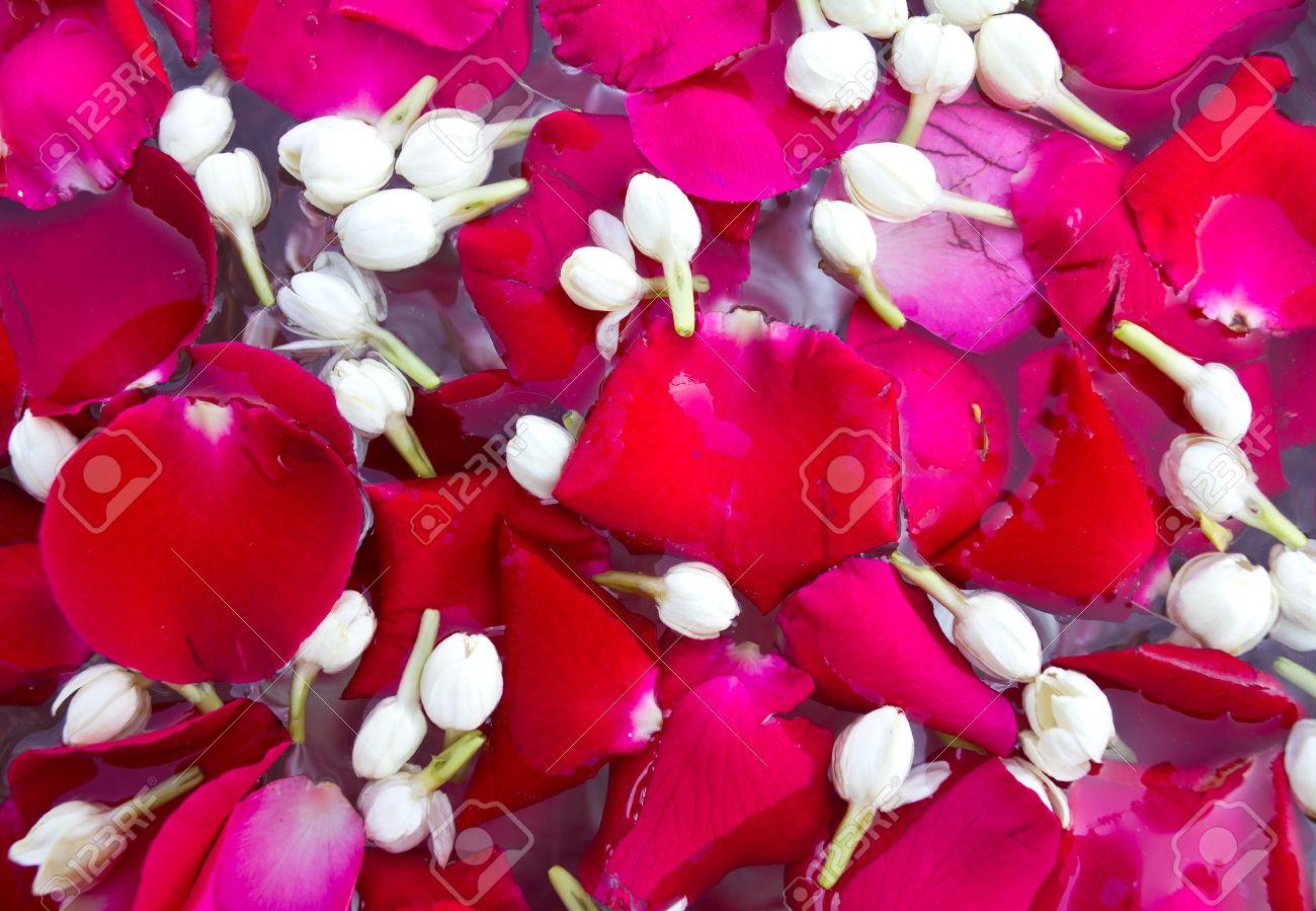 Rose petals and jasmine flowers floating on the water to be played rose petals and jasmine flowers floating on the water to be played in april stock photo izmirmasajfo