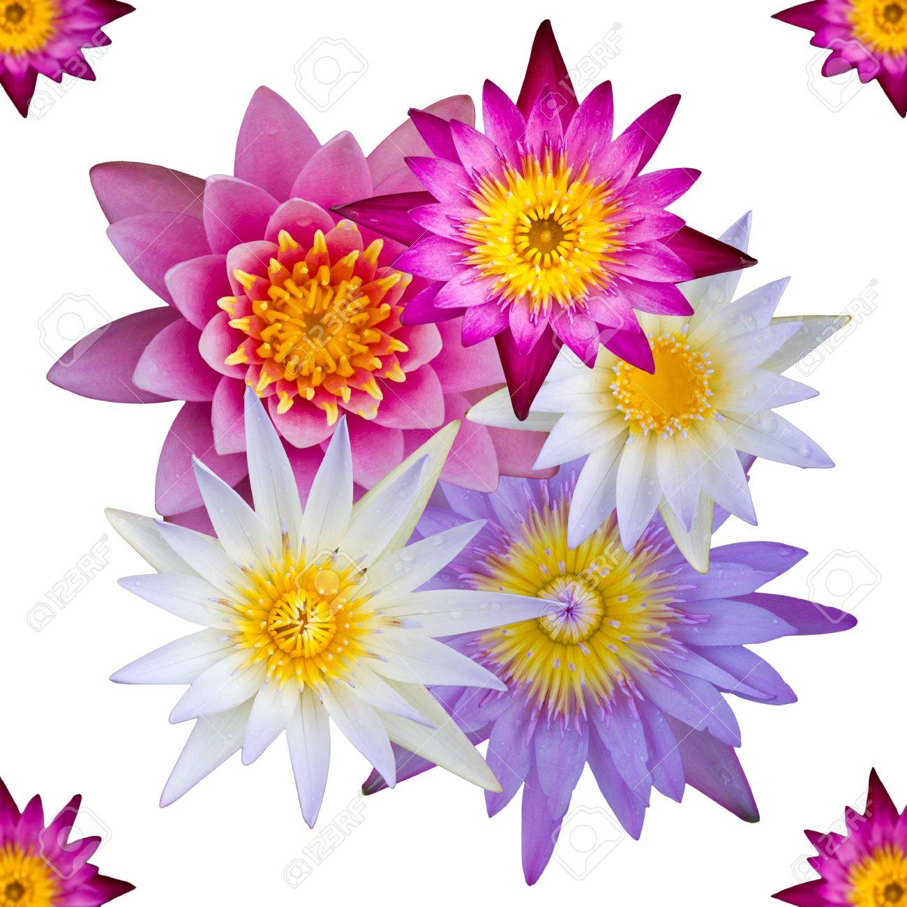 Isolated top view of colorful lotus flowers many of which are isolated top view of colorful lotus flowers many of which are overlapping stock photo mightylinksfo Images