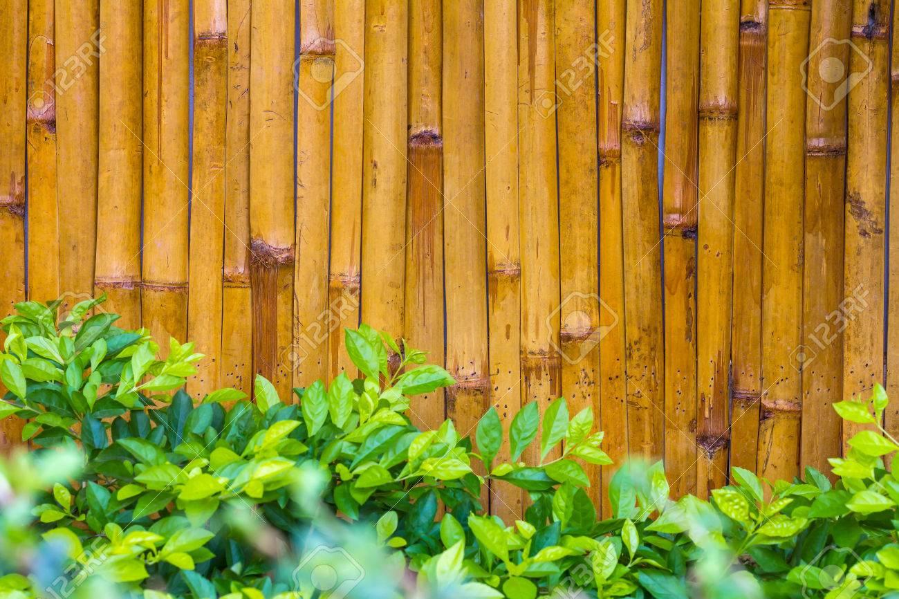 Hintergrund Close Gelb Bambus Wand Braun Glänzend Grüne Blätter Sind Schöne  Szene Auf Der Vorderseite