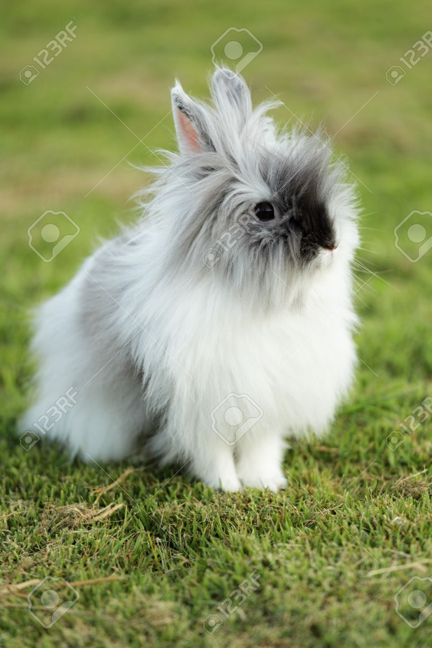cute teddy bear rabbit on grass field stock photo picture and