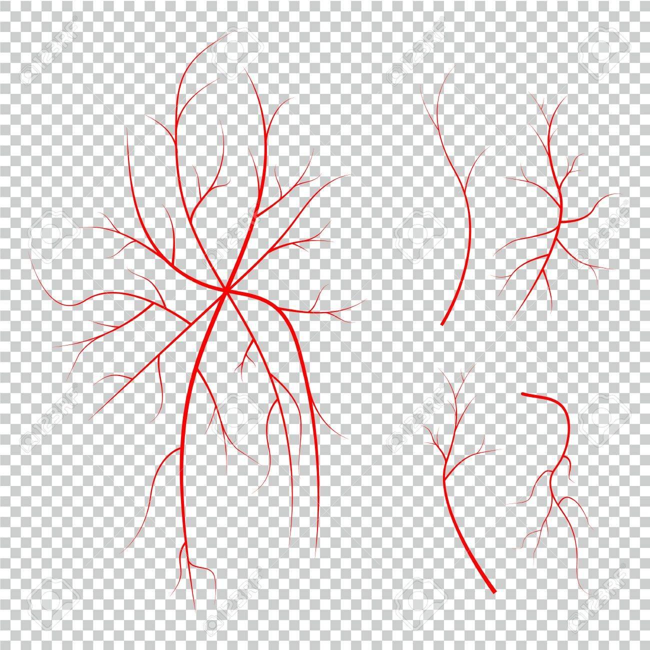 Ansammlung Der Menschlichen Augenadern, Rote Blutgefäße, Blutsystem ...
