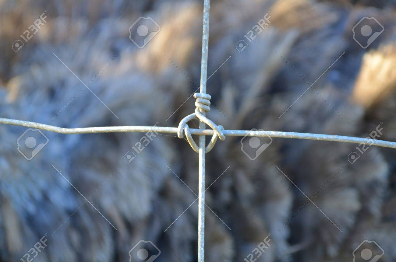 Wire cage Stock Photo - 16614781