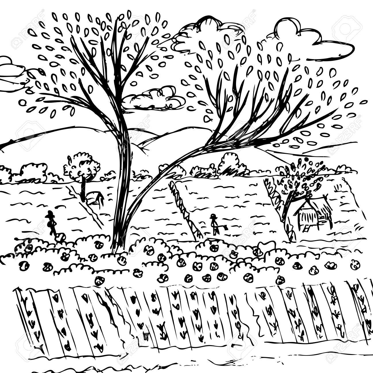 Farmland Sketch, Free Hand Drawing Nature Vector Royalty Free ... for Farmland Sketch  53kxo