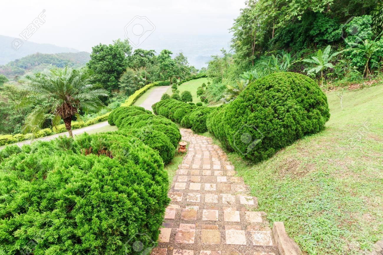Pathway Unter Grünen Rasen Mit Zierbäume Im Garten Im Freien
