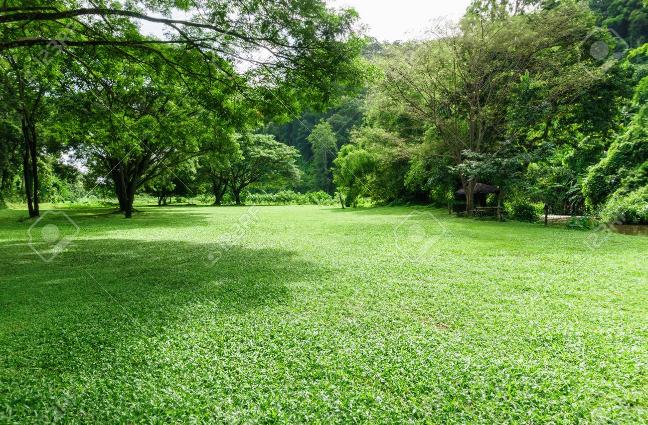 green lawn landscape with tree shadow in park - 69100050