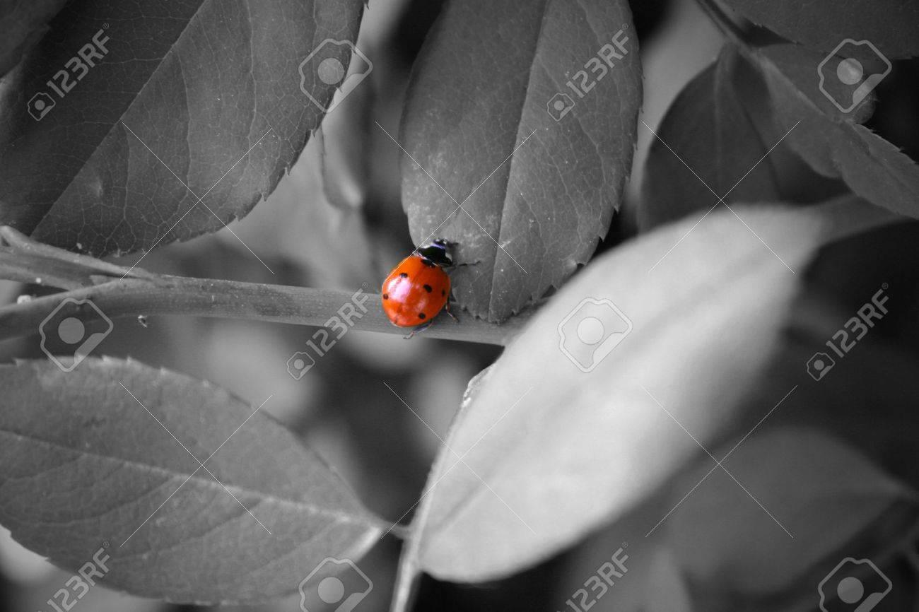 Ladybug Stock Photo - 222175
