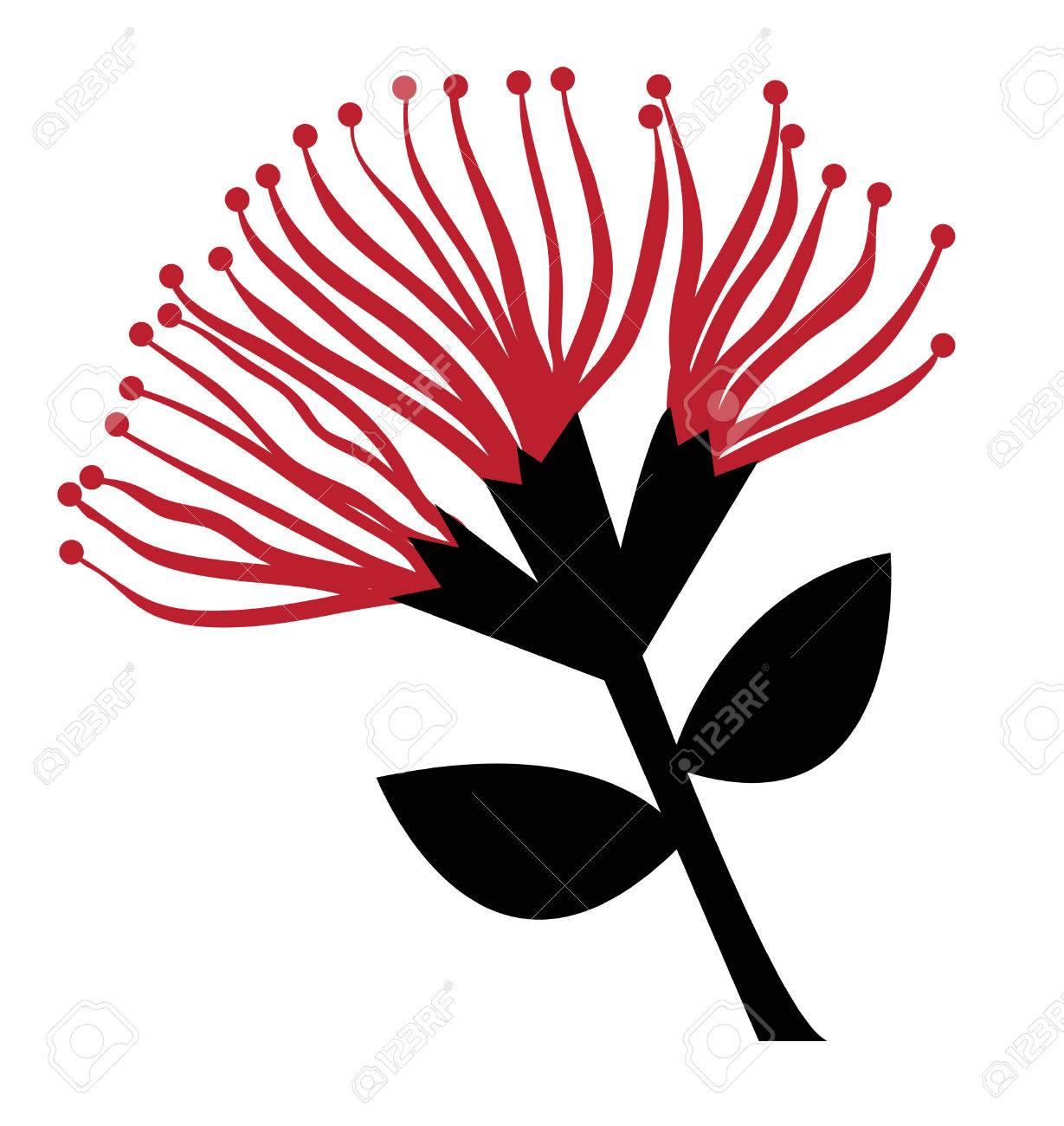 Pohutukawa Flower - 69483239