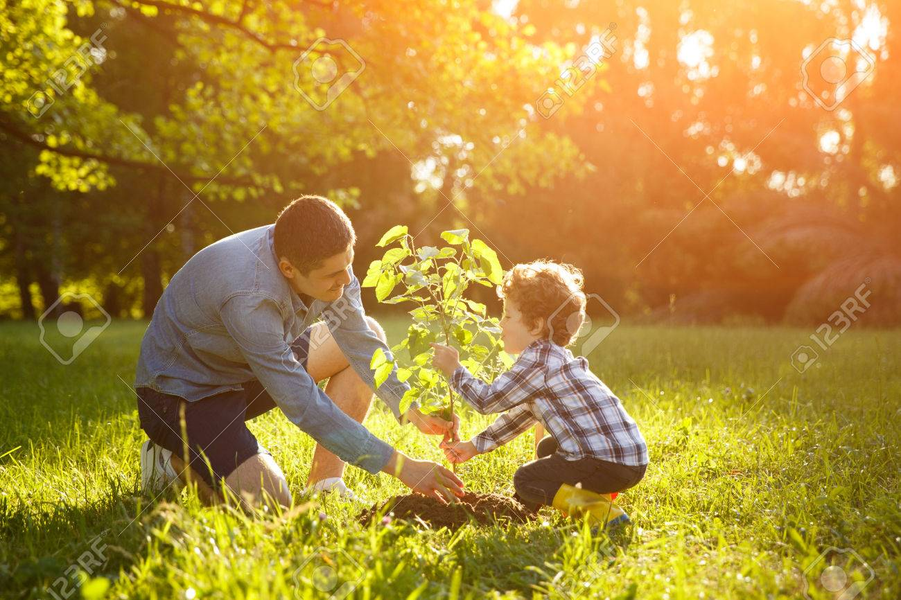 Father and son setting plant - 81566329