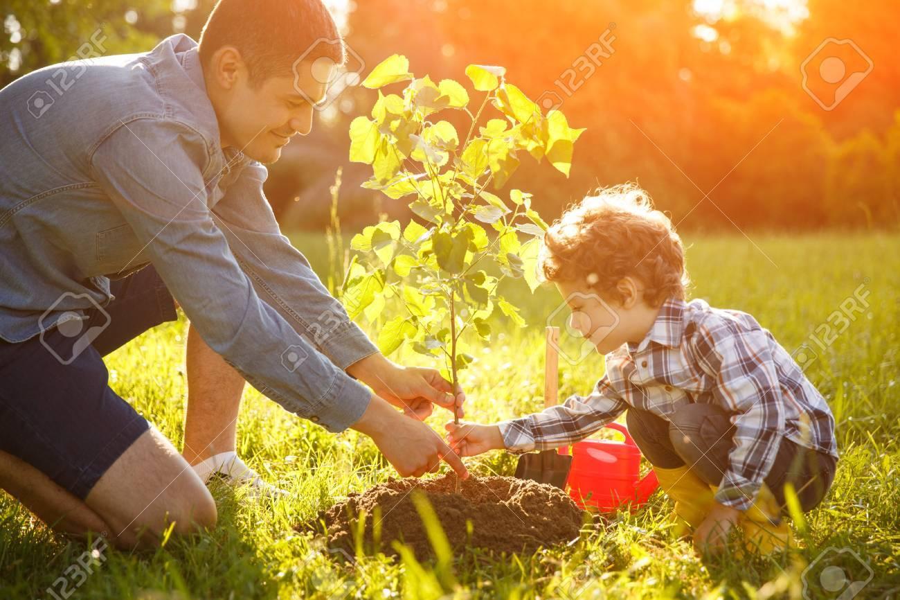Boy and man planting seedling - 82413162