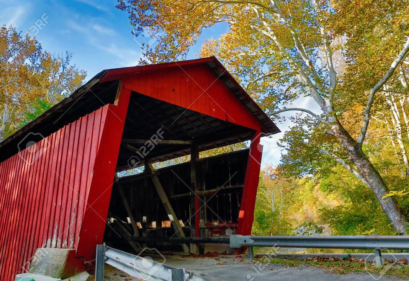 c2cf7563f Un Gigantesco árbol Sicómoro Con El Color Del Otoño Destaca Por Un Puente  Rojo Puente Vivos Cubiertos Cubiertos Es Rolling Stone Puente Cubierto