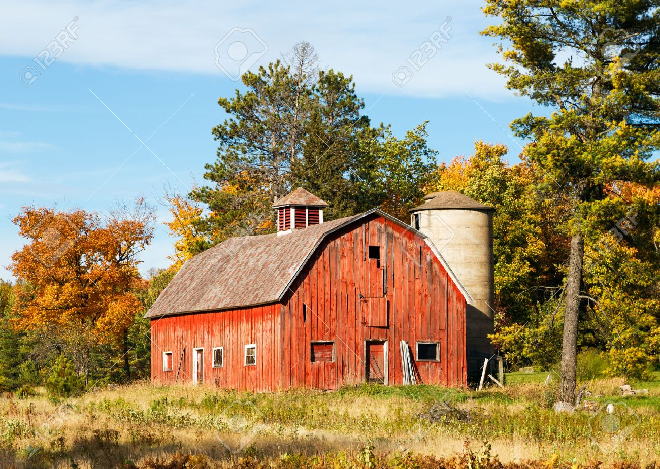 Cow on green pasture with red barn with grain silo royalty free stock - Red Barn An Old Red Barn With Silo Is Surrounded By Trees With Colorful Fall