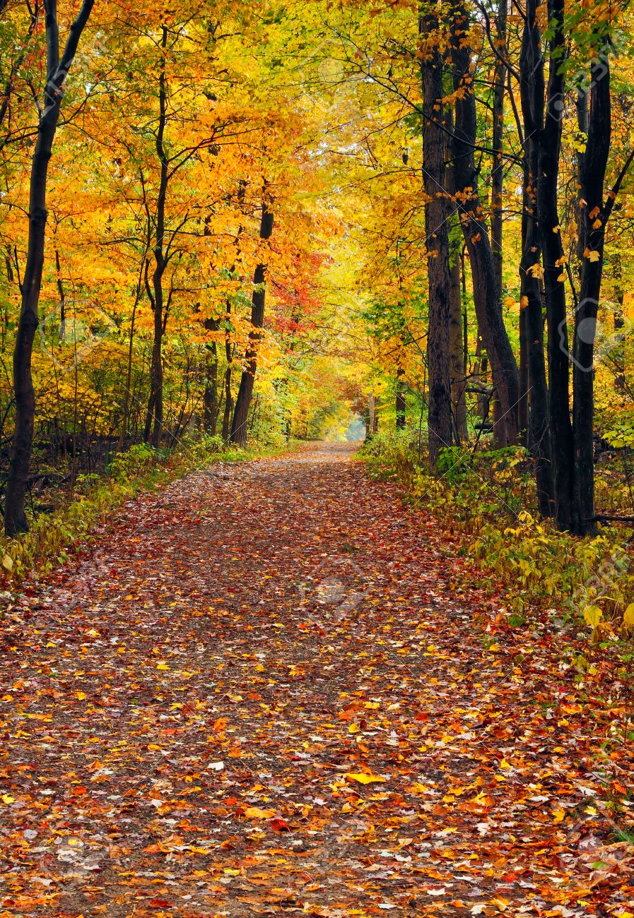 A Trail Covered With Fallen Autumn Leaves Is Lined With Trees