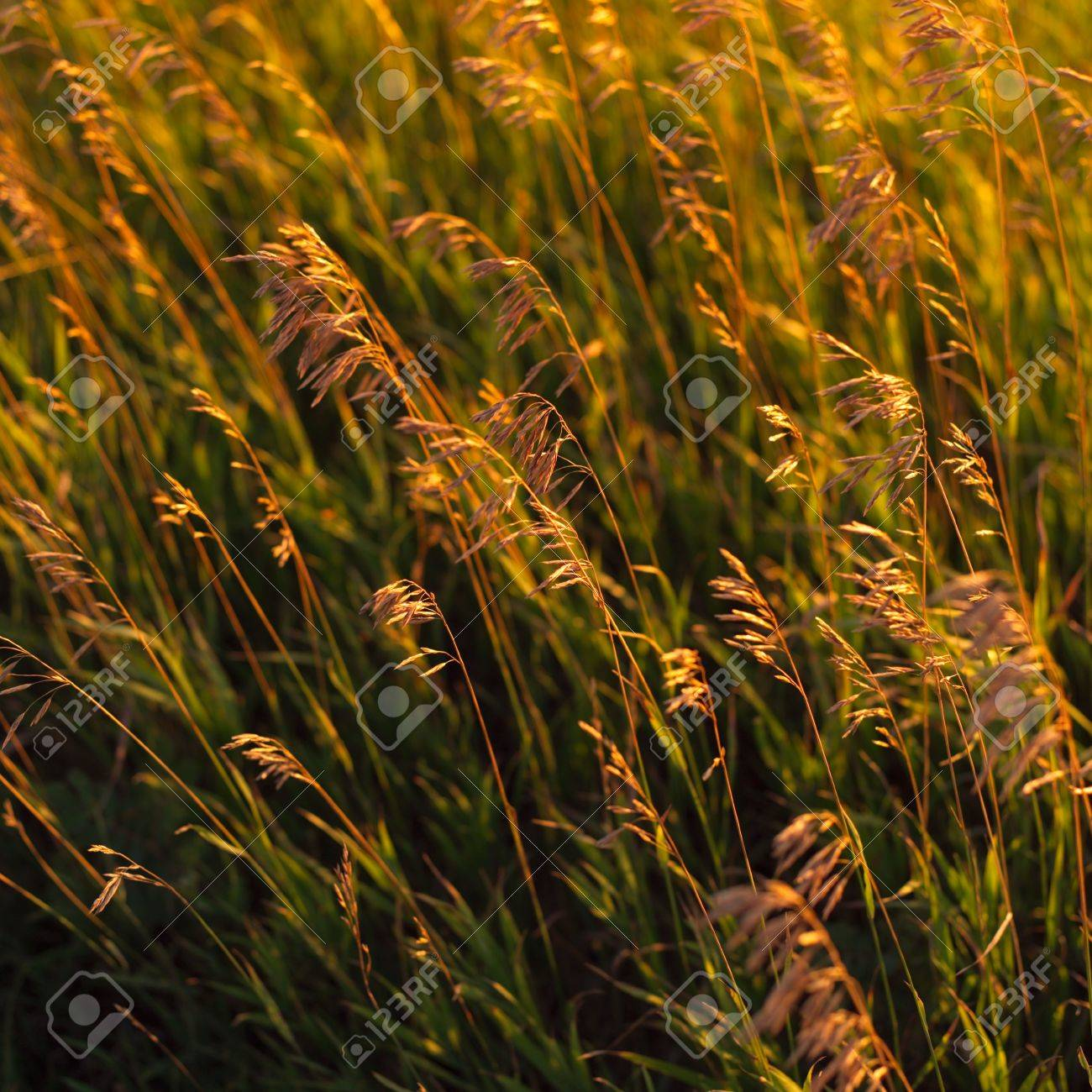 Canadian Prairies,Crop in prairie field Stock Photo - 2348360
