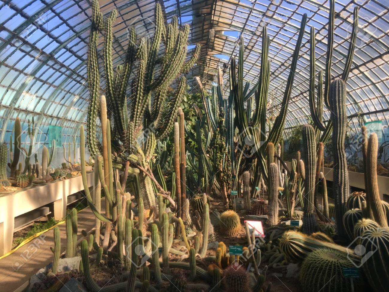 Inside Cactaceae Greenhouse Of Jardin Des Serres DAuteuil Botanical ...