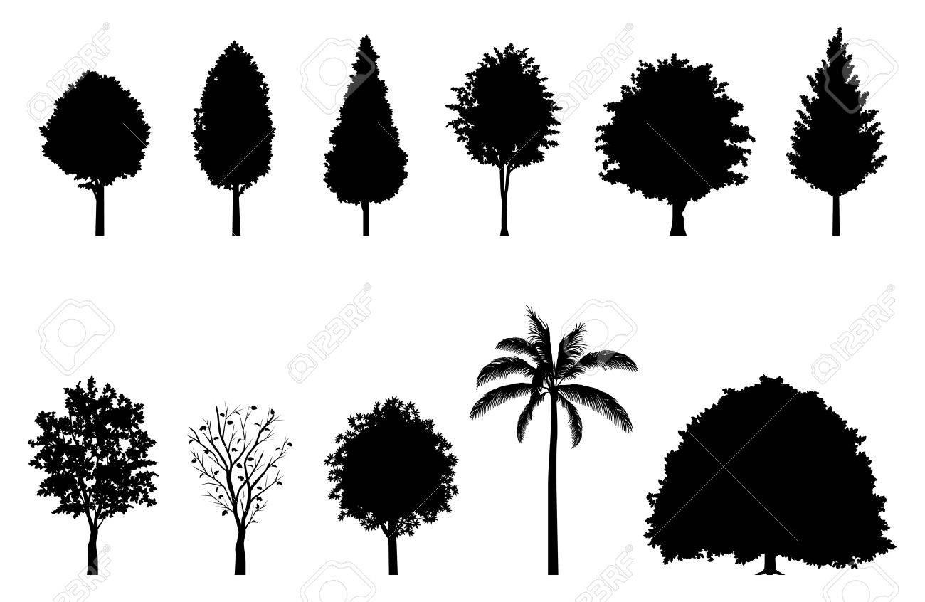 Roadside tree Silhouette - 25627397