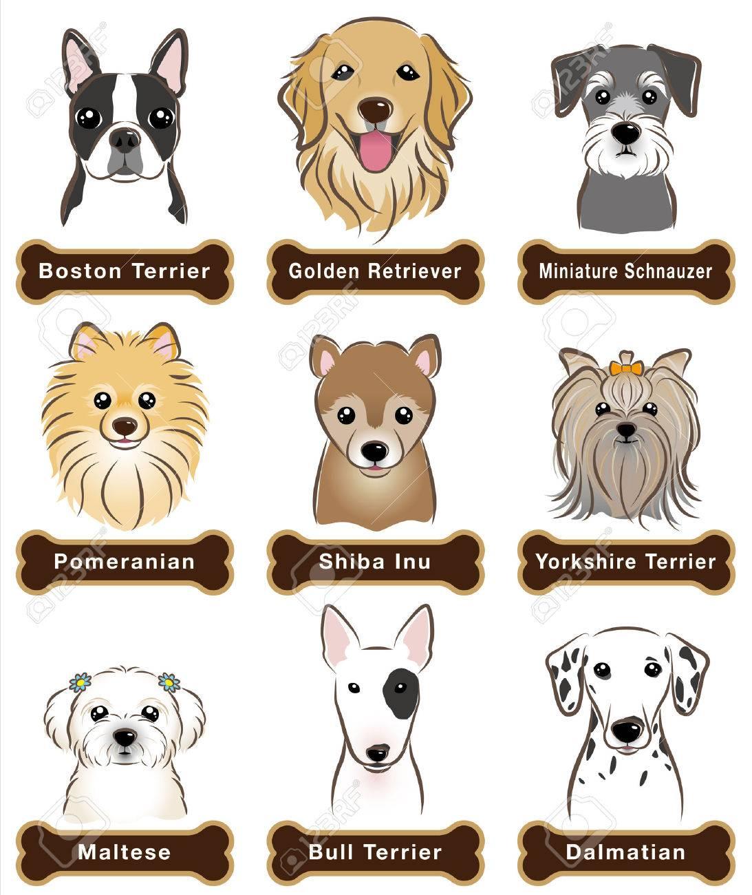 Dog / Nameplate - 31655854