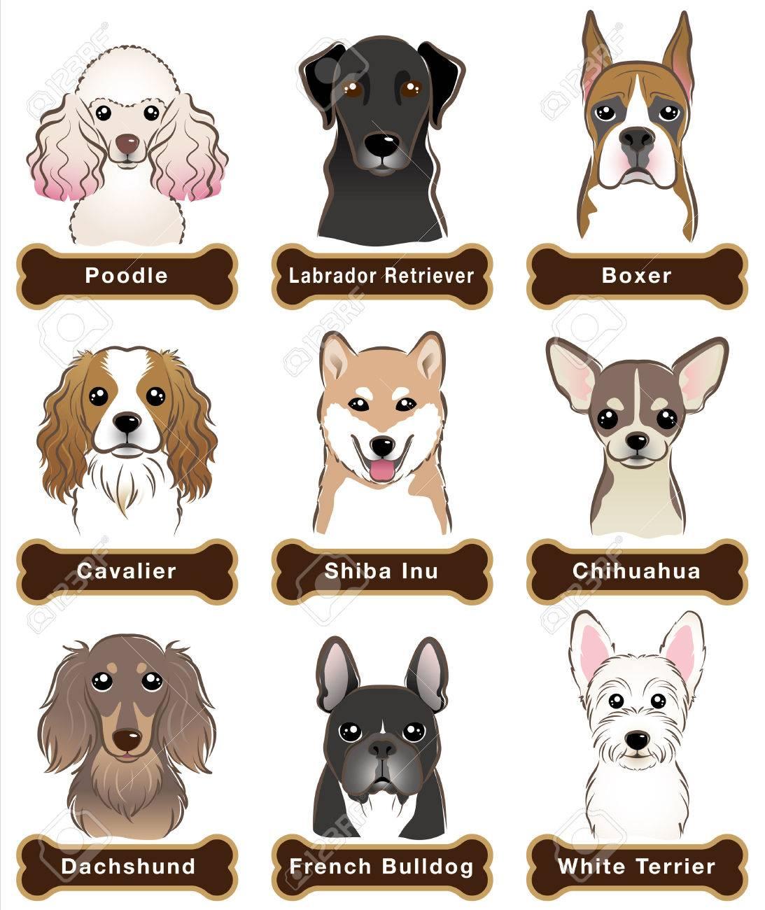Dog / Nameplate - 31655853