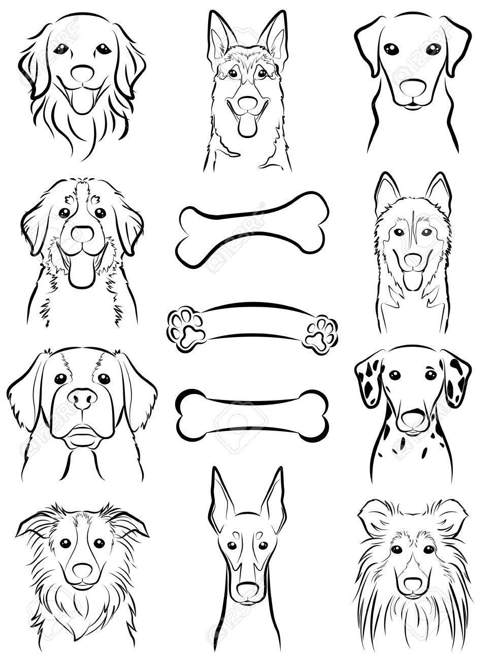 Dog / Line drawing - 31655863