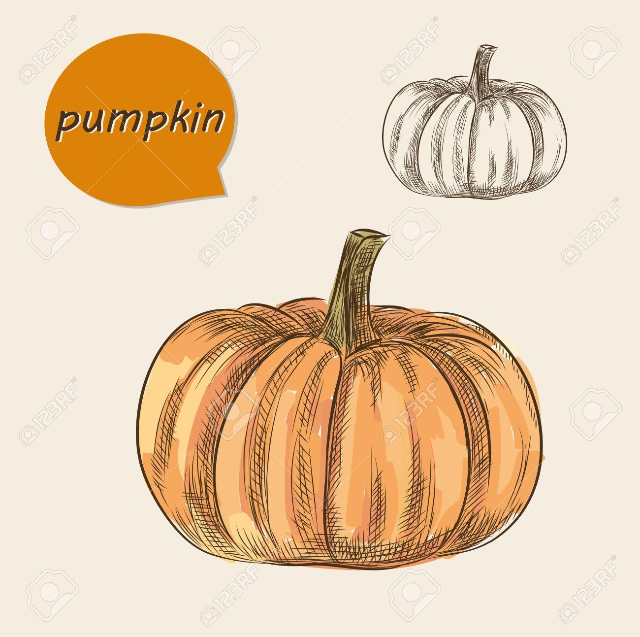realistic pumpkin drawing. pumpkin. realistic sketch. draw by wacom cintiq stock vector - 34856392 pumpkin drawing