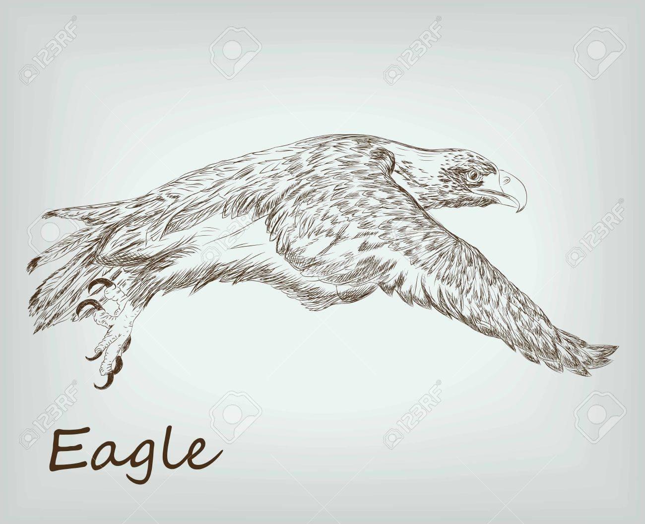 Sketches Wild Eagle Wild Animals Sketches