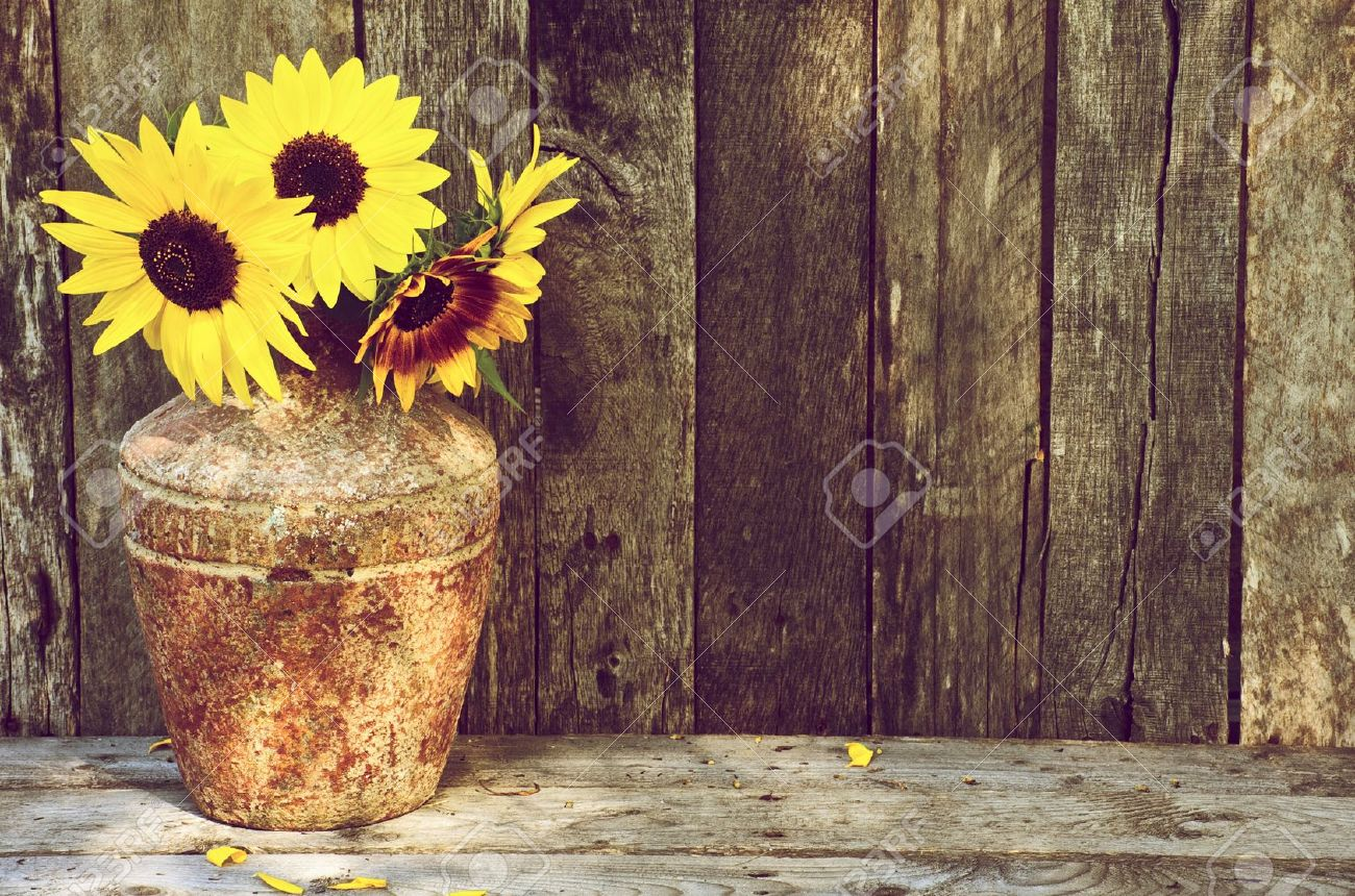 High contrast, vintage image of a rustic vase with beautiful sunflowers in  the partial shade