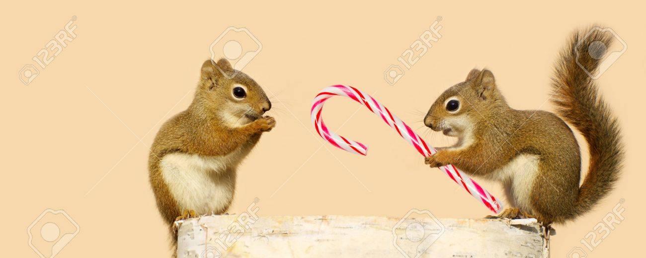 Nettes Bild Von Einem Jungen Männlichen Eichhörnchen Bietet Eine ...
