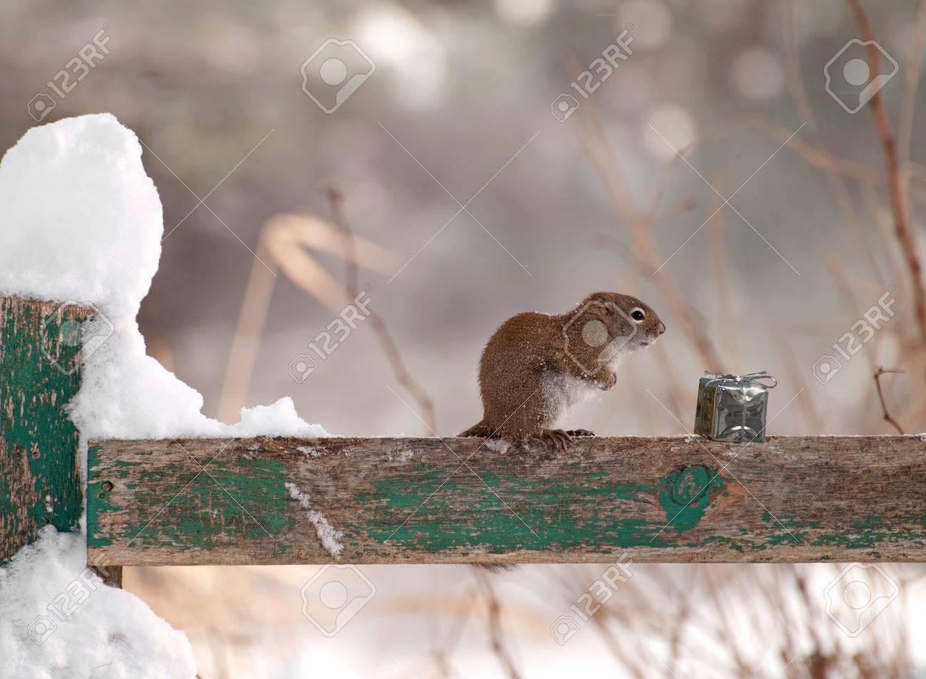 Ein Kleines Eichhörnchen Zittert Im Wind Auf Einem Zaun An Einem ...