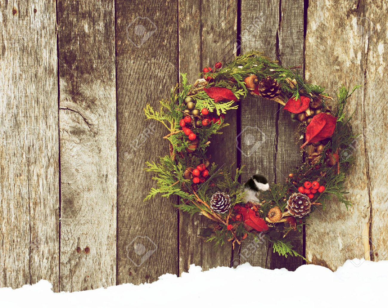 Christmas wreath with natural decorations and a cute little chickadee peeking out hanging on a rustic wooden wall with copy space Stock Photo - 16470009