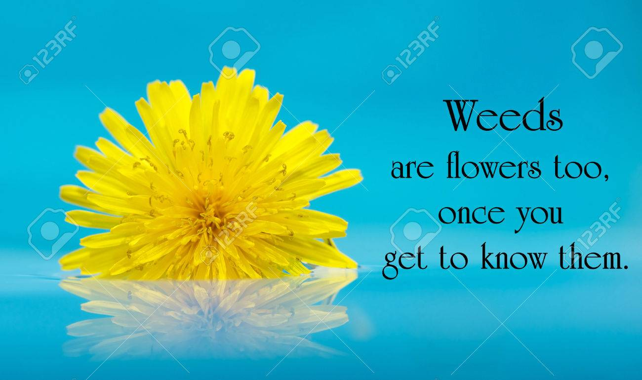 Inspirational Quote On Life With A Beautiful Yellow Dandelion