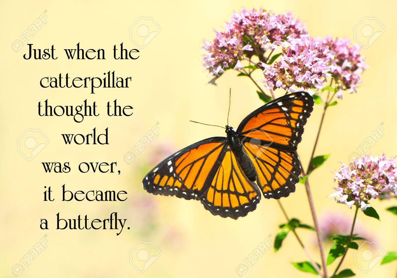 Inspirational Quote On Life With A Pretty Monarch Butterfly Stock