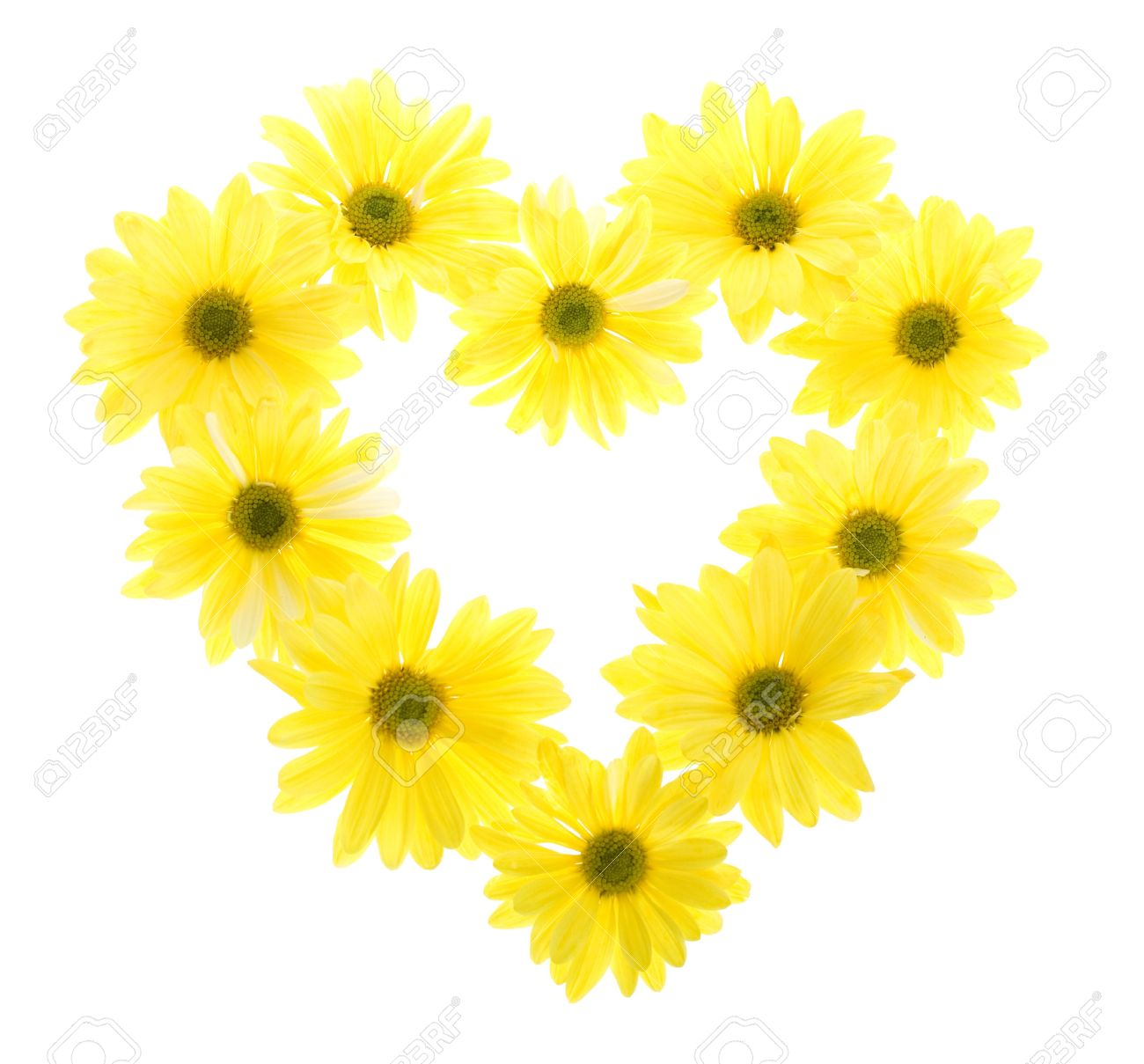 Ten yellow daisy flowers isolated on white white flowers tinted stock photo ten yellow daisy flowers isolated on white white flowers tinted yellow arranged in the shape of a heart no stem mightylinksfo