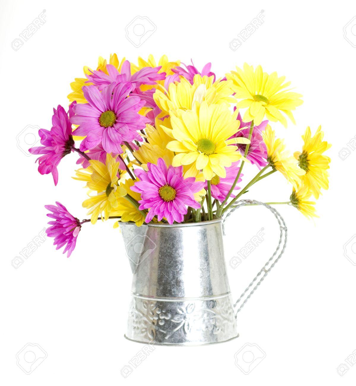 Chrysanthemum Maximum Assortment Of Yellow And Pink Shasta Stock