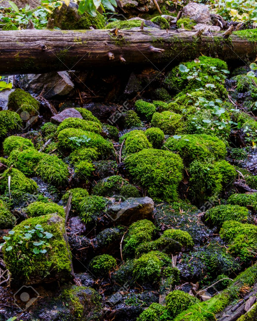 Moss and log in Colorado forest merge as a creek tumbles over