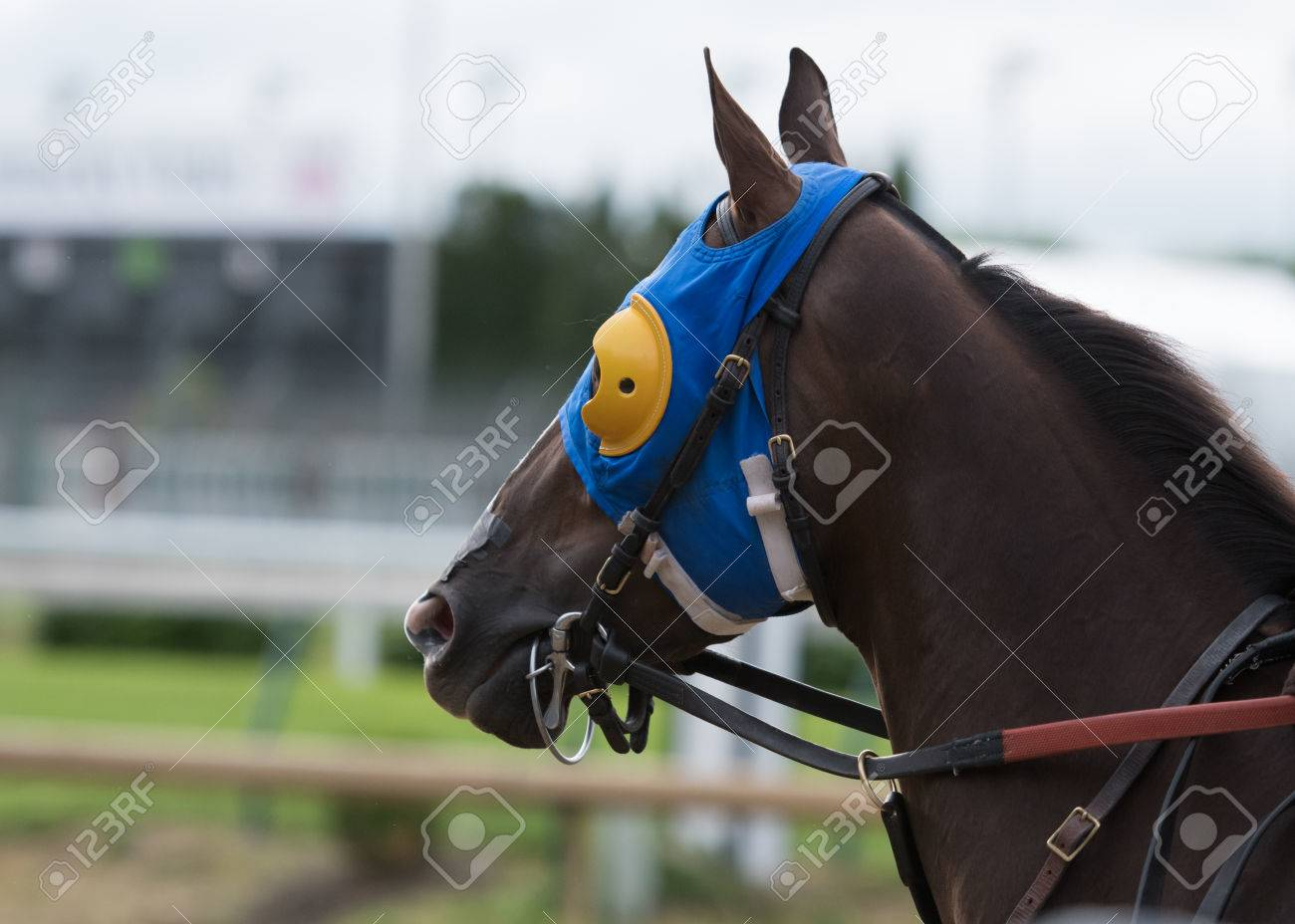 Horse With Blue And Yellow Blinkers And Leather Bridle Stock Photo Picture And Royalty Free Image Image 58974288