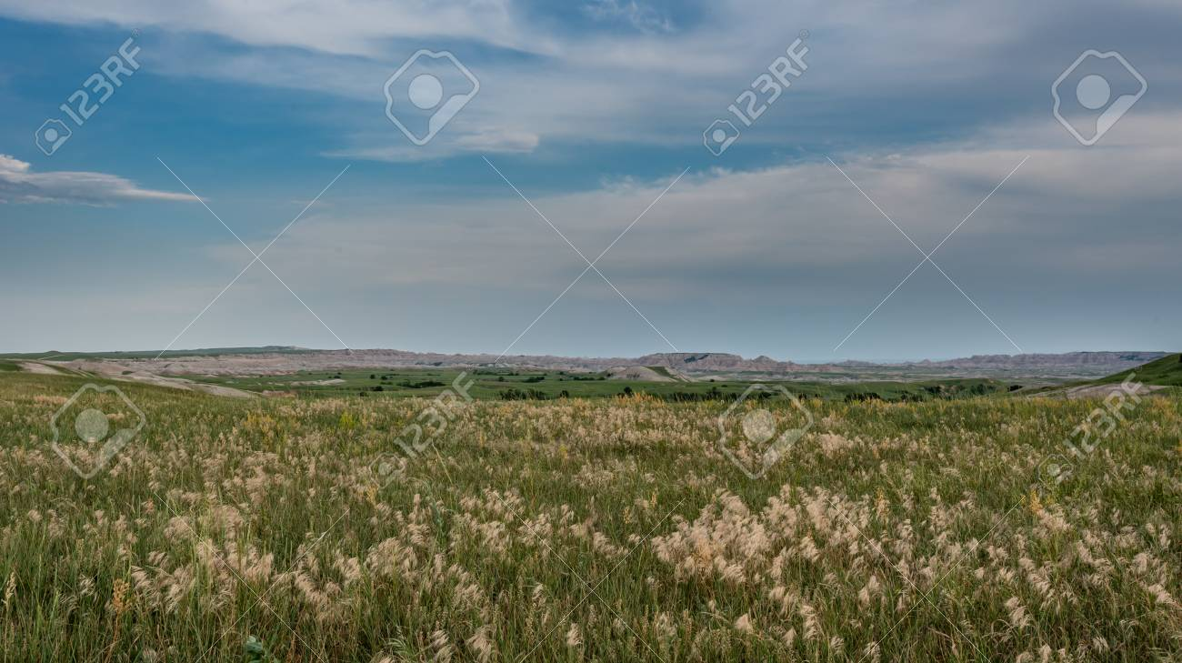 Wheat Grasses Across Field with Badlands - 119578594